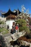 Chińczyk ogrodowy Portland Zdjęcie Royalty Free