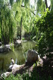 Chińczyka ogród przyjaźń Fotografia Stock