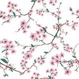 Chińczyka Sakura biały bezszwowy wzór Fotografia Stock