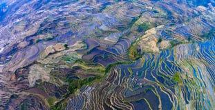 Chińczyka tarasu gospodarstwa rolnego Yunnan yuanyang zdjęcie stock