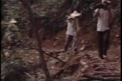 Chińscy lumberjacks trudzi się w lesie zdjęcie wideo
