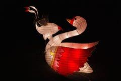 Chińscy ptaki w latarniowym festiwalu Obrazy Royalty Free