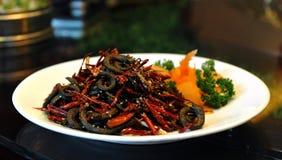 chińska kuchni węgorza pieprzu czerwień Fotografia Royalty Free