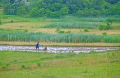 Chiński średniorolny działanie w polu w Chińskiej wsi Obrazy Stock