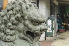 Chiński cesarski lew w chińczyku obrazy royalty free