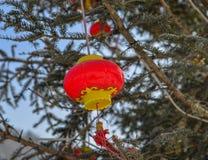 Chiński czerwony lampion w sosna lesie fotografia stock
