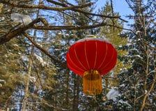 Chiński czerwony lampion w sosna lesie obraz royalty free