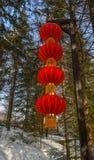 Chiński czerwony lampion w sosna lesie fotografia royalty free
