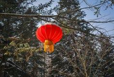 Chiński czerwony lampion w sosna lesie obraz stock