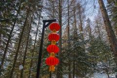 Chiński czerwony lampion w sosna lesie zdjęcia royalty free