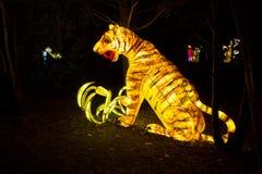 Chiński lampionu tygrys Obraz Royalty Free