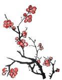 Chiński obraz śliwkowy okwitnięcie ilustracja wektor