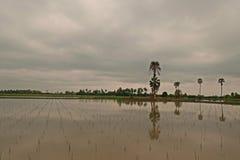 Chiński wodnego kasztanu pole, wodna powódź jak irlandczyka pole Fotografia Royalty Free