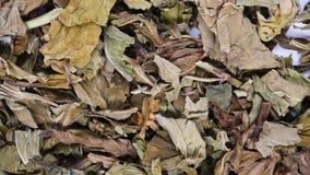 Chiński ziele bo go lub menthae haplocalycis herba lub dziki nowy ziele zdjęcie wideo