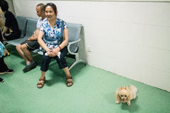 Chiński zwierzę domowe szpital Obrazy Stock