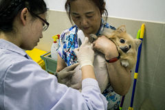 Chiński zwierzę domowe szpital Obraz Royalty Free
