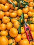 Chińskie małe cumquat pomarańcze Zdjęcie Stock