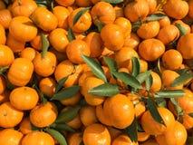 Chińskie małe cumquat pomarańcze Obrazy Royalty Free