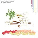 Chińskie pikantność z witaminą K, C, B6 i kopaliny, ilustracja wektor