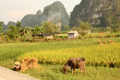 chińskiej scenerii typowy yangshuo fotografia royalty free