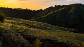 Chińczyka gospodarstwa rolnego tarasy przy zmierzchem Obraz Stock