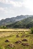 chińczyka gospodarstwo rolne Obraz Royalty Free