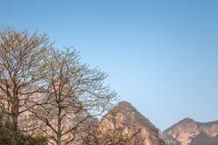 Chińczyka Shenxianju wioski pierwotna natura Zdjęcie Royalty Free