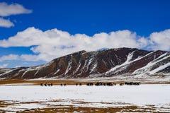chińska sceneria Fotografia Royalty Free