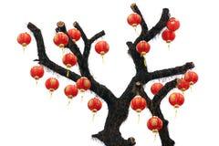 chiński latarniowy drzewo Zdjęcie Stock