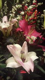 Chiński nowego roku kwiatu bukiet Zdjęcia Stock