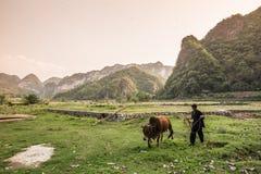 Chiński rolnik Zdjęcie Royalty Free