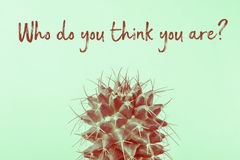 Chi voi pensano il cactus Immagini Stock Libere da Diritti
