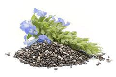 Chia Salvia hispanica Pile of seeds with flowers on white back. Ground royalty free stock image