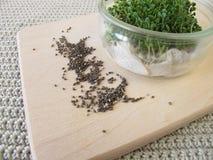 Chia seedlings Stock Photography