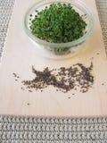 Chia seedlings Royalty Free Stock Images
