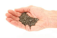 Chia Seeds In Hand orgânico Foto de Stock