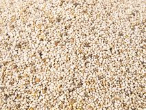 Chia Seeds - Healthy Nutrition royalty free stock photo