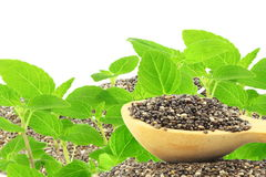 Chia seeds Salvia hispanica with plant with text copy space Stock Photos