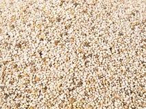 Chia Seeds - sund näring royaltyfri foto