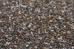 Chia sia makro- teksturę dla tło Zdjęcie Stock