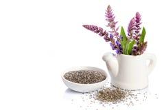 Chia siembra el superfood sano con la flor Imagen de archivo