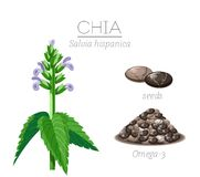 Chia Royalty Free Stock Photography