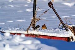 Chiacchierando nella neve fresca Immagine Stock Libera da Diritti
