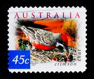 Chiacchierata cremisi Ephthianura tricolore, natura dell'Australia - abbandoni il serie degli uccelli, circa 2001 Fotografia Stock