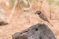 Chiacchierata di Fuerteventura Fotografia Stock Libera da Diritti