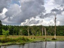 Chiamata del lago panther Fotografie Stock Libere da Diritti