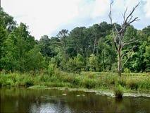 Chiamata del lago panther Fotografia Stock Libera da Diritti