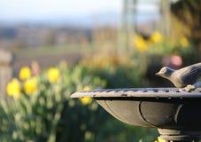 Chiamata di tutti gli uccelli Immagine Stock Libera da Diritti