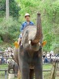 """CHIANG MAI, †de TAILÂNDIA """"6 de maio de 2017: Mostra diária do elefante o 6 de maio de 2017 no acampamento do elefante de MaeSa Imagens de Stock"""