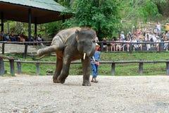 """CHIANG MAI, †de TAILÂNDIA """"6 de maio de 2017: Mostra diária do elefante o 6 de maio de 2017 no acampamento do elefante de MaeSa Imagens de Stock Royalty Free"""